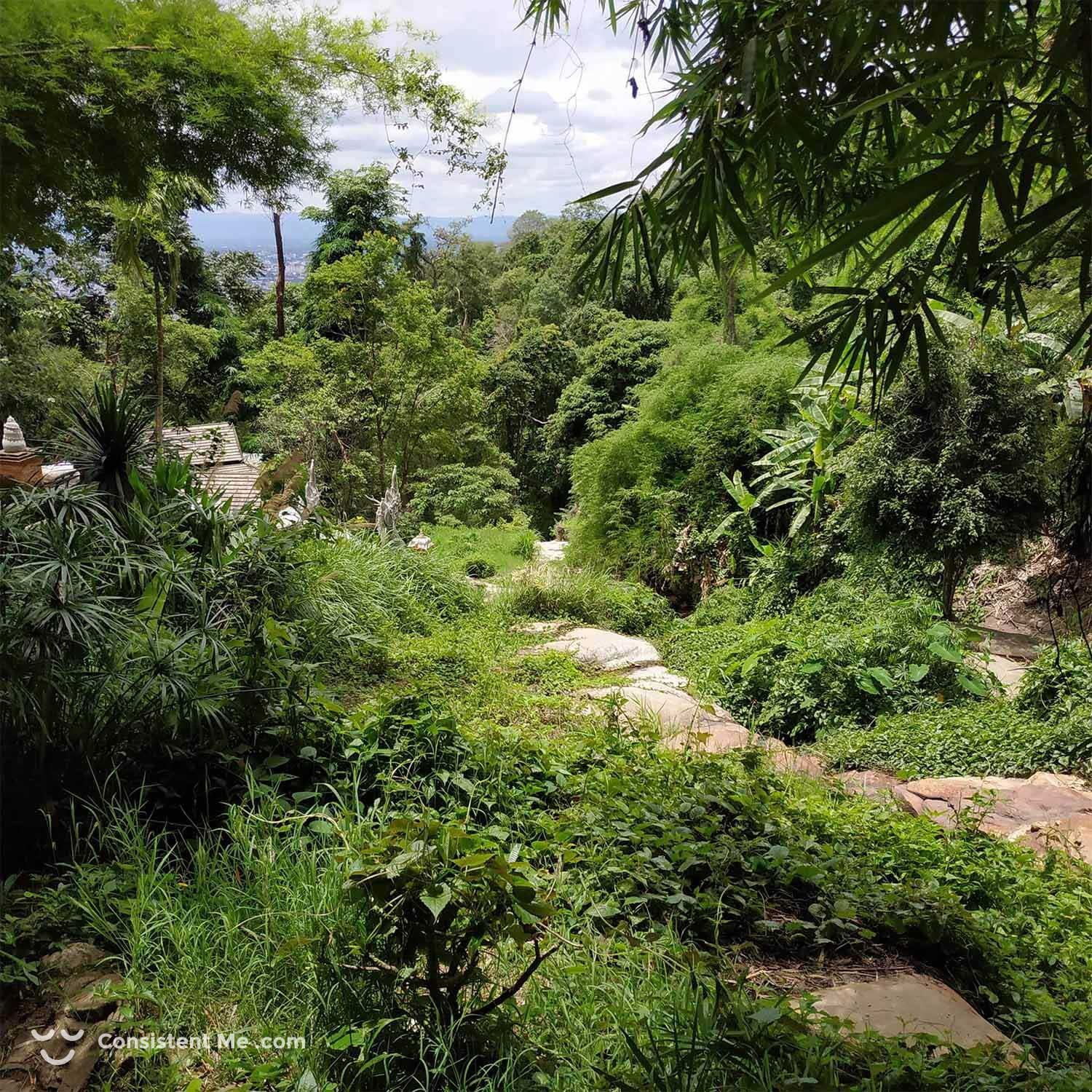 Picture from my hike on the Galae Loop in Chiang Mai